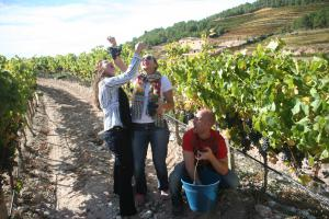 Celler Joan Ametller (DOQ Priorat)